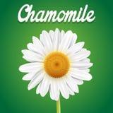 chamomile zbliżenia dof kwiatu macro płycizny strzał Obraz Royalty Free