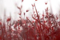 chamomiles άγρια περιοχές Στοκ Εικόνες