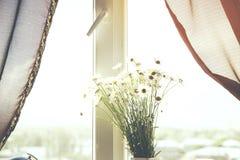 Chamomiles στο παράθυρο στοκ φωτογραφίες με δικαίωμα ελεύθερης χρήσης