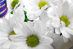 chamomiles Immagine Stock