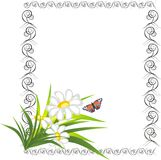Chamomiles And Butterfly In The Decorative Frame Royalty Free Stock Image