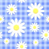 Chamomiles on blue checkered background. Seamless pattern  eps 10 Royalty Free Stock Images