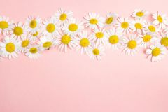 Chamomiles border with copy space on pink background. Royalty Free Stock Photography