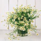 Chamomiles bouquet Stock Photos