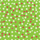 Chamomiles or daisy Stock Image