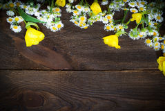 Chamomiles at dark wooden surface Royalty Free Stock Photography
