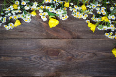 Chamomiles at dark wooden surface Stock Image