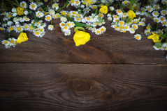 Chamomiles at dark wooden surface Royalty Free Stock Images