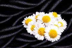 Chamomiles flowers on black silk Stock Image