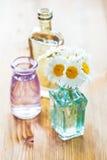 Chamomiles flowers Royalty Free Stock Photo