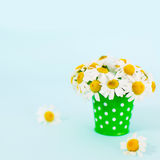 Chamomiles. Flowers in bucket. Chamomiles in vase. Spring Stock Photography