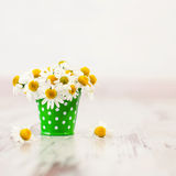 Chamomiles. Flowers in bucket. Chamomiles in vase. Spring Stock Images