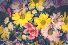 Chamomiles, gerberas and other flowers as background or backdrop. Toned image.  royalty free stock images