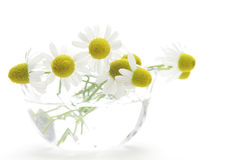 Chamomiles in glass on white background Stock Photos
