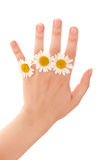 Chamomiles on hand Royalty Free Stock Images