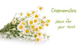 Chamomiles isolated on white background Royalty Free Stock Image