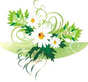 Chamomiles and ladybird. Bouquet. Vector Stock Image