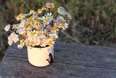 Chamomiles in the old mug, views of field Royalty Free Stock Images