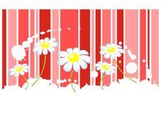 chamomiles pasy royalty ilustracja