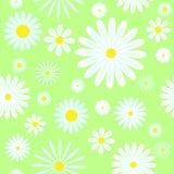 Chamomiles seamless pattern. On green. Vector illustration Stock Photo