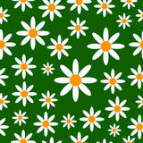 Chamomiles seamless pattern background. Royalty Free Stock Images