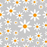 Chamomiles seamless pattern background. Royalty Free Stock Image