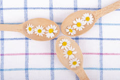 Chamomiles in of wooden spoons Royalty Free Stock Images