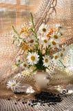 Chamomilies Stock Photo