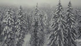 Chamonix Forest banque de vidéos