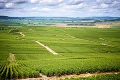 Champán, llano cubierto totalmente con los viñedos cerca de Vernezay francia Fotos de archivo libres de regalías