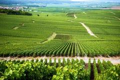 Champán, viñedo en las colinas cerca de Vernezay En el fondo el llano con los viñedos francia Imágenes de archivo libres de regalías