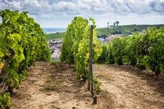 Champán, viñedo en las colinas cerca de Vernezay En el fondo el llano con los viñedos y el faro francia Imagen de archivo libre de regalías