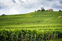 Champán Viñedo y molino de viento Champagne Region cerca de Vernezay Francia Foto de archivo