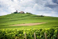 Champán Viñedo y molino de viento Champagne Region cerca de Vernezay Francia Fotografía de archivo libre de regalías