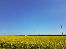 Champ éolien Photographie stock libre de droits
