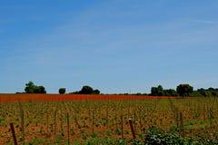 Champ agricole de couleurs lumineuses Horizontal de source photographie stock libre de droits