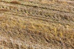 Champ agricole et ciel bleu photo stock
