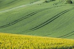 Champ agricole onduleux images libres de droits