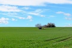 Champ agricole vert vif avec les arbres éloignés photographie stock