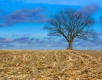 Champ après la moisson d'arbre solitaire Photographie stock