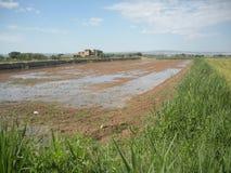 Champ arrosé par irrigation d'inondation Photographie stock