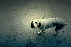 Champ attentif de chien Image stock