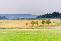 Champ avec des arbres après la récolte Image stock