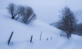 Champ avec des arbres en hiver Images stock