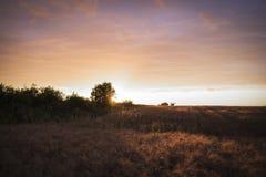 Champ avec du blé au coucher du soleil Photo libre de droits