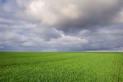 Champ avec du blé vert et le ciel dramatique photographie stock libre de droits