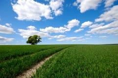 Champ avec l'arbre sur la colline images stock