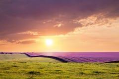 Champ avec la lavande et l'herbe avant coucher du soleil Nuage dramatique foncé image libre de droits