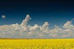 Champ avec le ciel bleu et les nuages blancs Photo stock