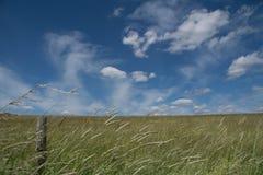 Champ avec le ciel bleu nuageux Photo libre de droits